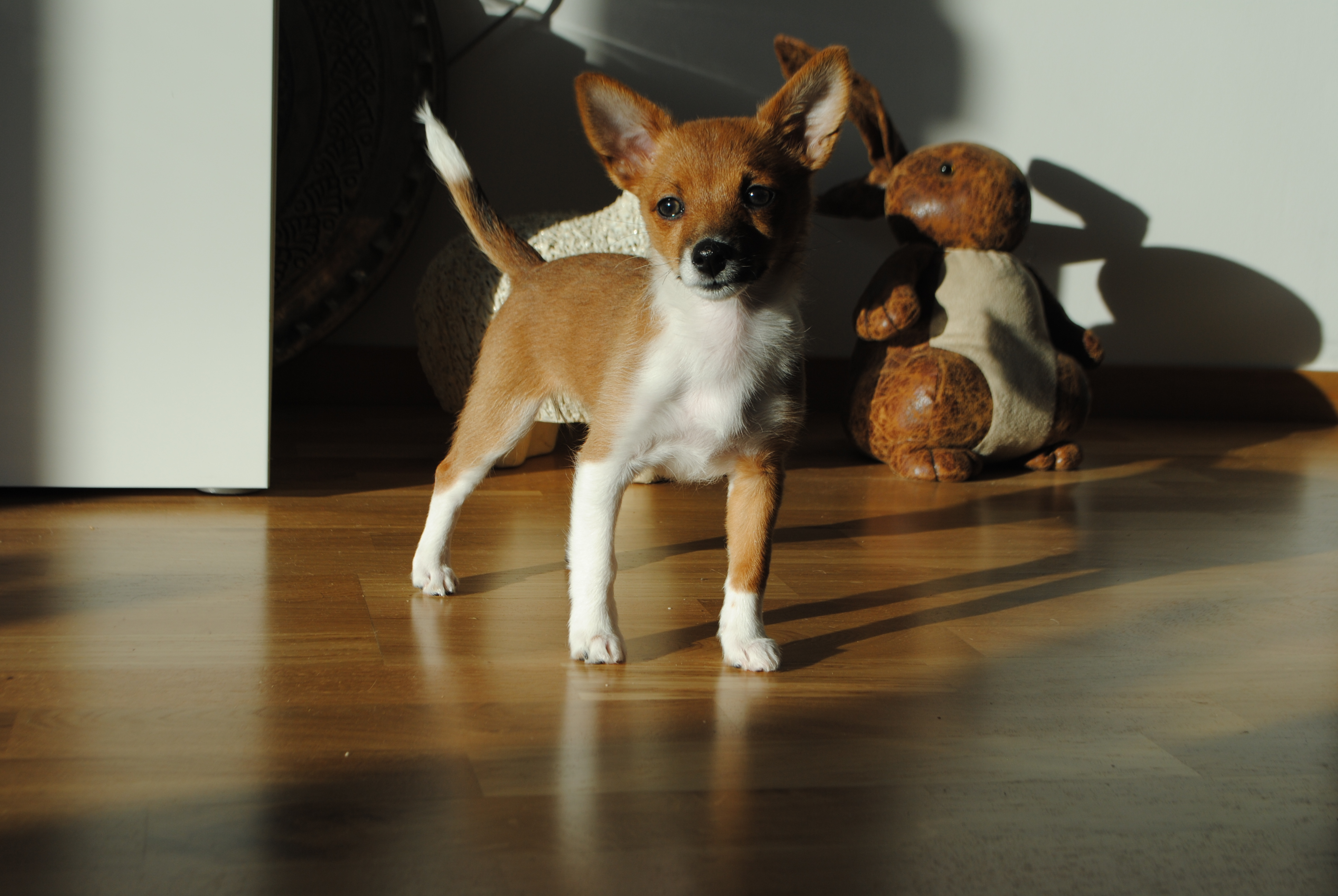 Veckans sötnos på webben hos – Härliga Hund