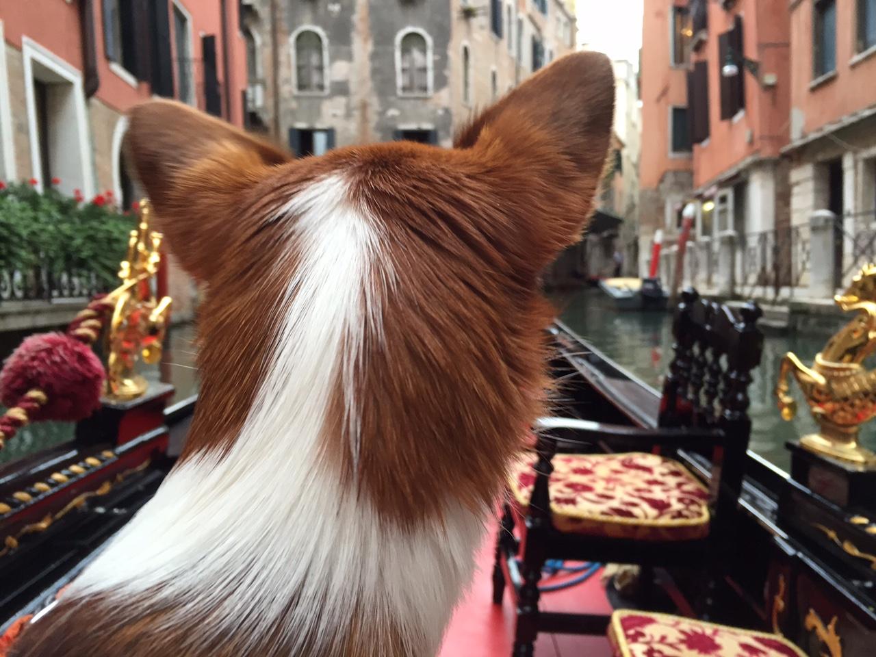 Resa med hund till Venedig