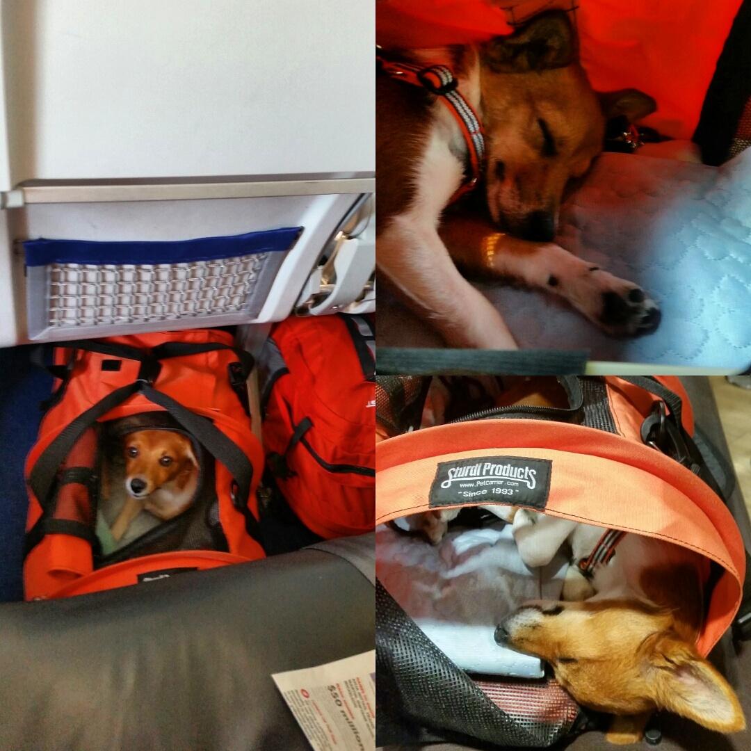 Resa med hund – flyga