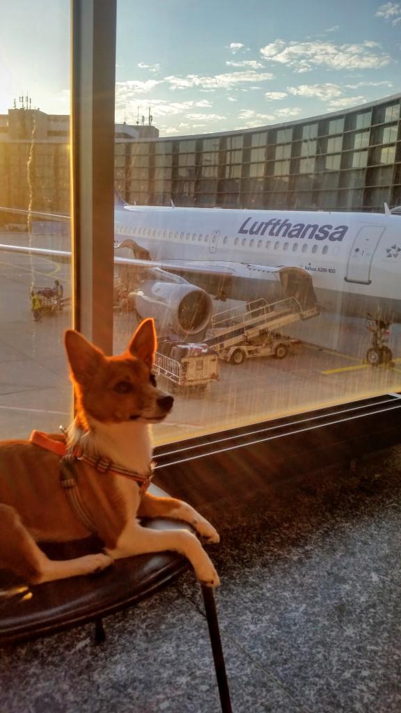 flyga_med_hund_lufthansa