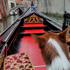 gondola_venice_resa_med_hund_podengo
