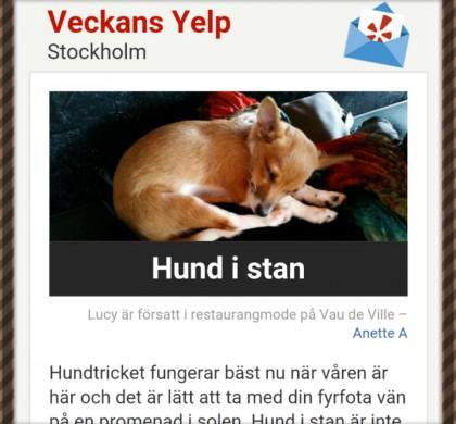Yelp – hundvänligt