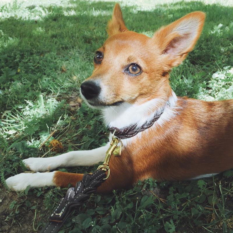 hundmodell