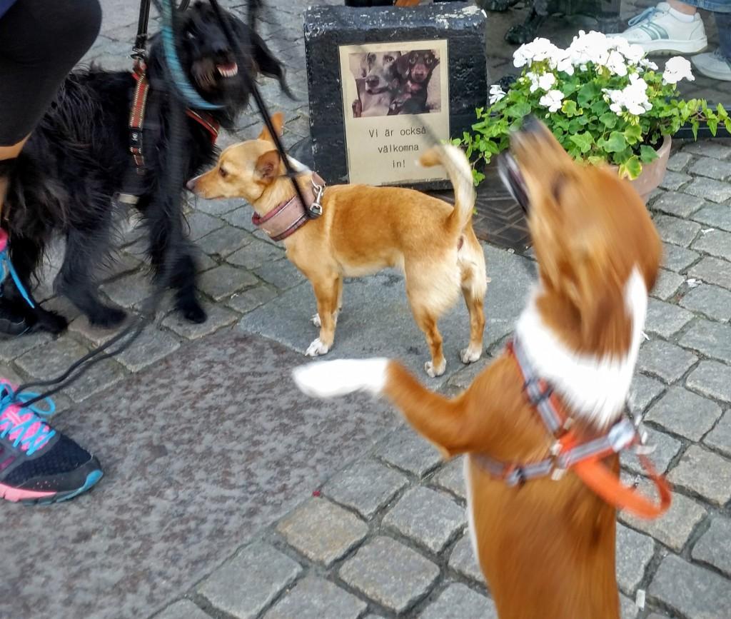 hundvänliga_göteborg_cafe