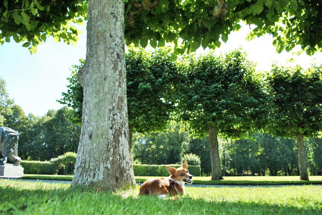 ulriksdalslott_trädet