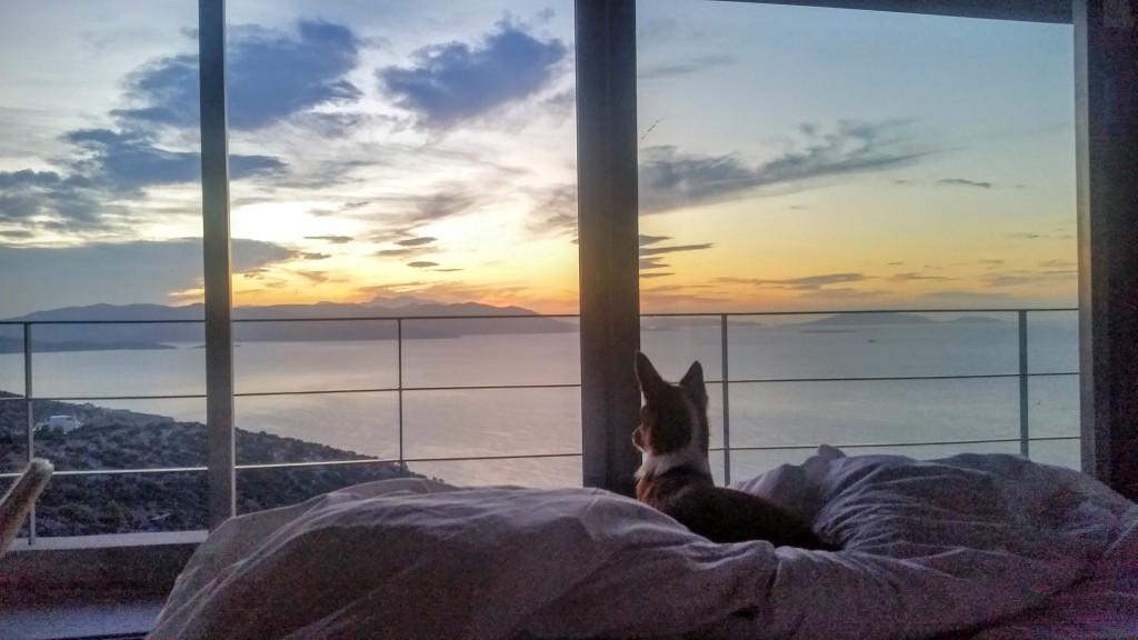 resa med hund till grekland