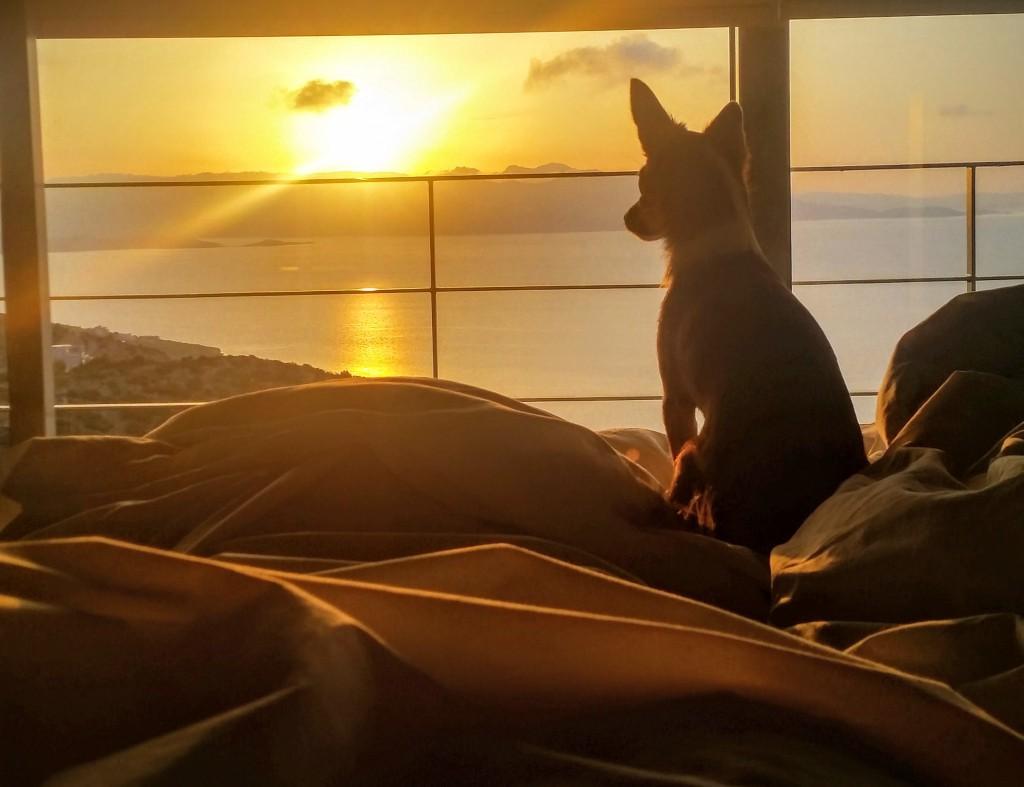 resa med hund till grekland, podengo