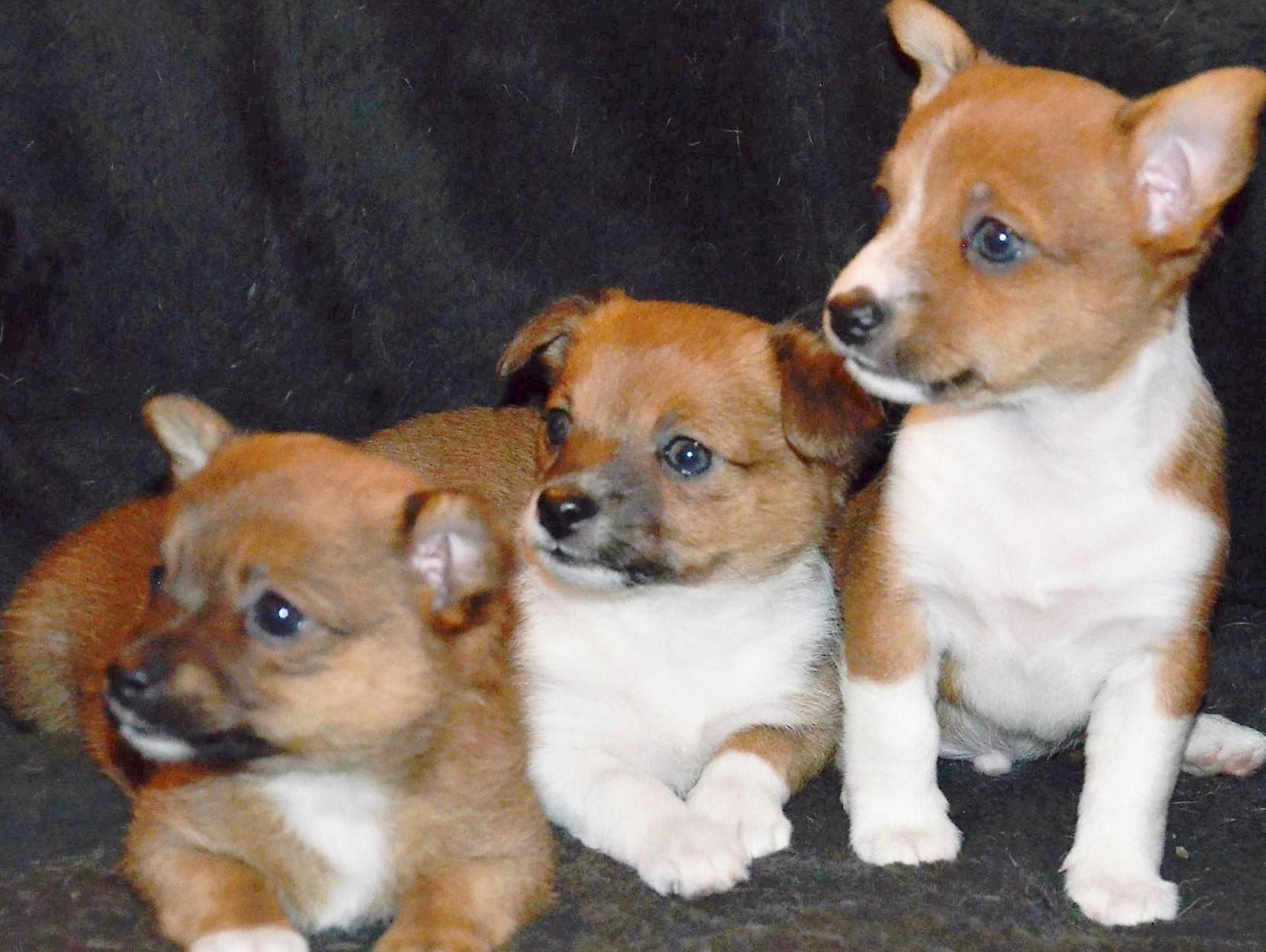 Hundkalas på Himmelska hundar