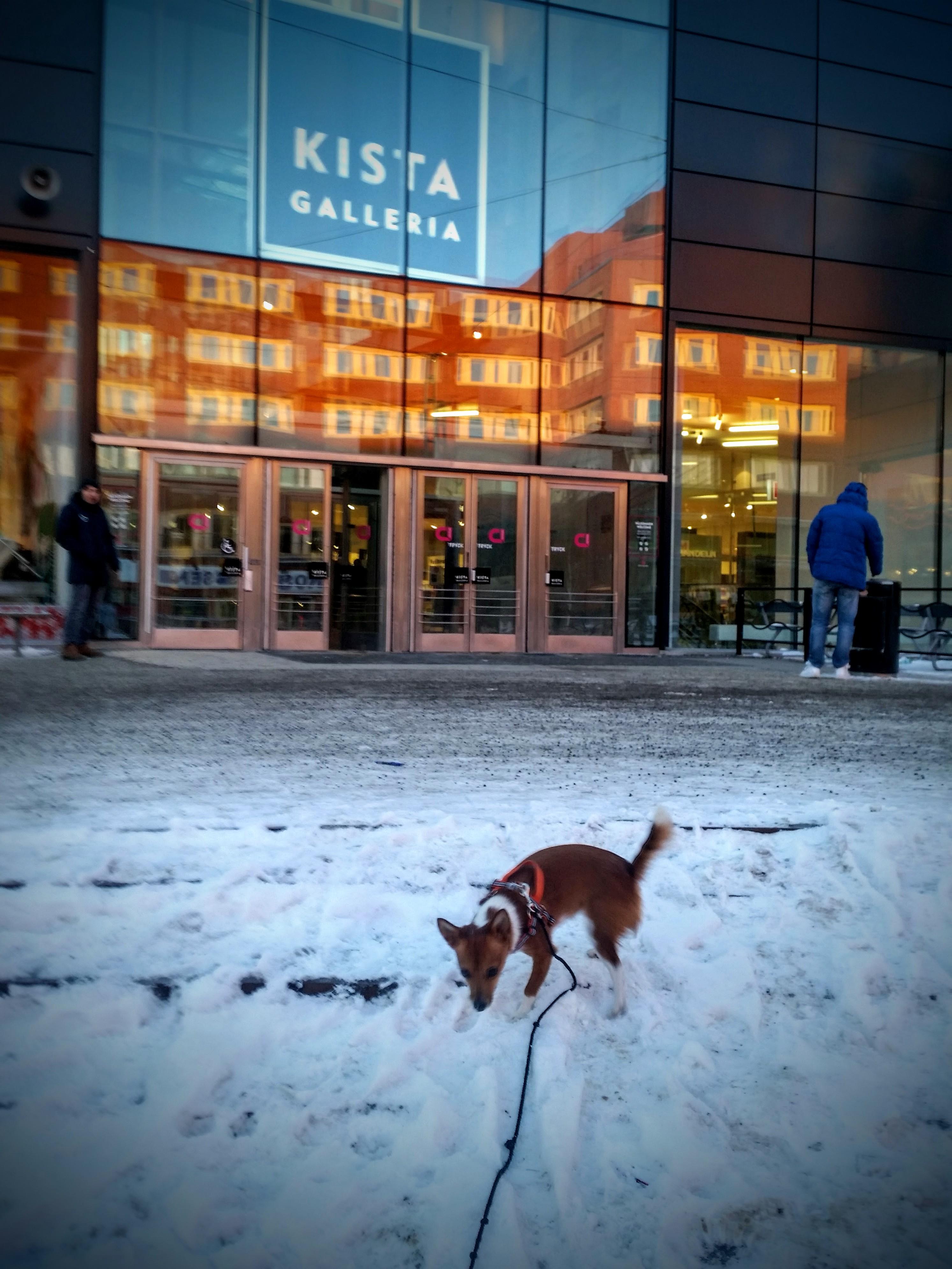 Kista galleria – hundvänligt!
