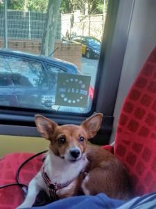 resa_med_hund_till_spanien_