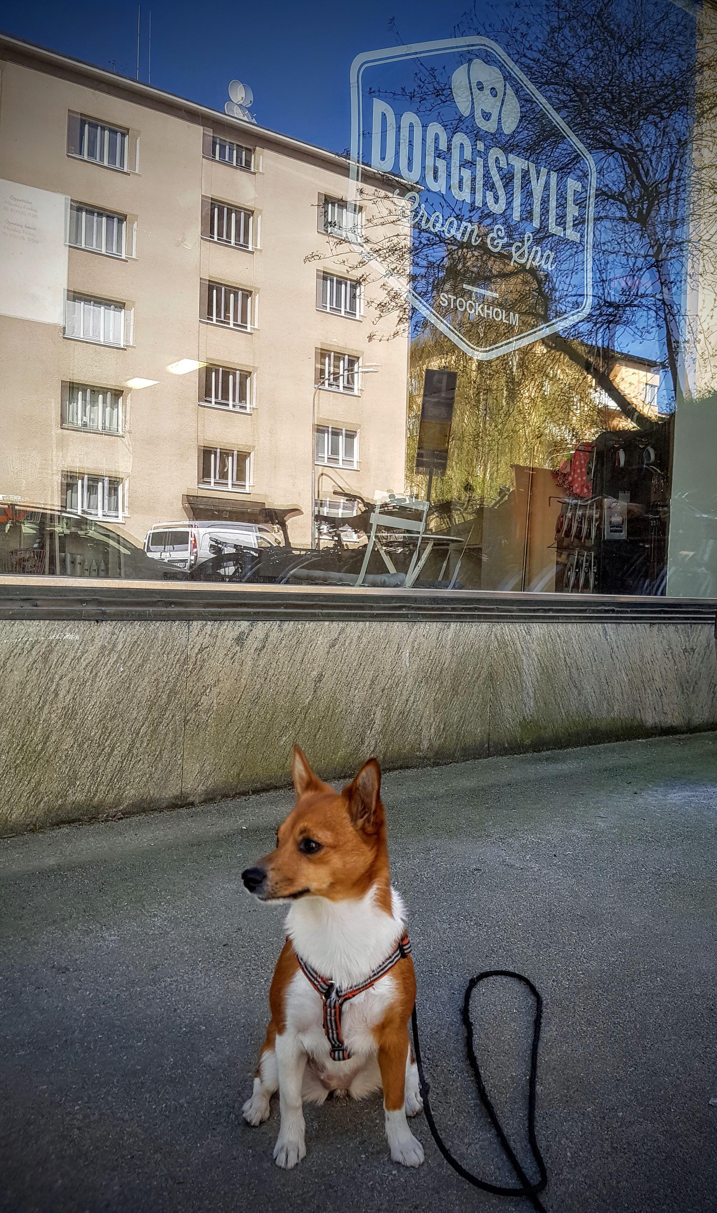 Hundfrisör – spatime!